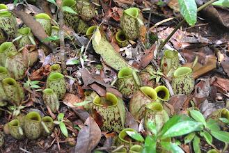 Photo: Piccole piante carnivore