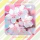 Cherry Blossom Wallpaper HD Download for PC Windows 10/8/7