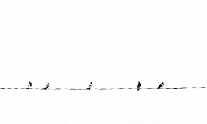 tutti in fila di artu