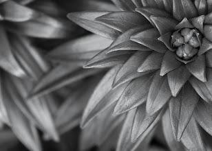 Photo: Fibonacci in Black & White -- Asiatic Lily blossom in my backyard.  I hope you are having an inspirational day!  #photography  #naturephotos  #blackandwhitephotography