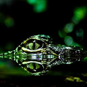Crack Eye by Dan Miller - Animals Reptiles (  )