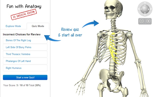 Fun With Anatomy 3d Skeletal Edition Chrome Web Store