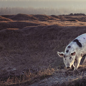 by Boris Bajcetic - Animals Other