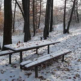 Зима by Georgi Kolev - Landscapes Forests ( сняг., слънце., сенки., пейки., маса., гора., листа. )