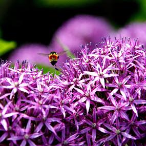 Pollination by Aaron Gould - Flowers Flower Gardens ( purple, bee, pollinate, flower )