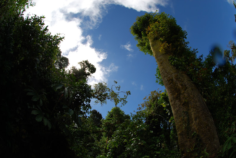 Photo: Looking into the canopy at Monteverde Cloud Forest Reserve