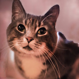 B.B. King by Nancy Senchak - Animals - Cats Portraits