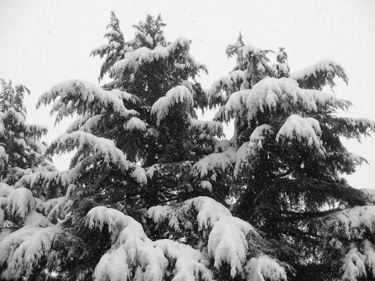 Semplicemente neve di Patatosa