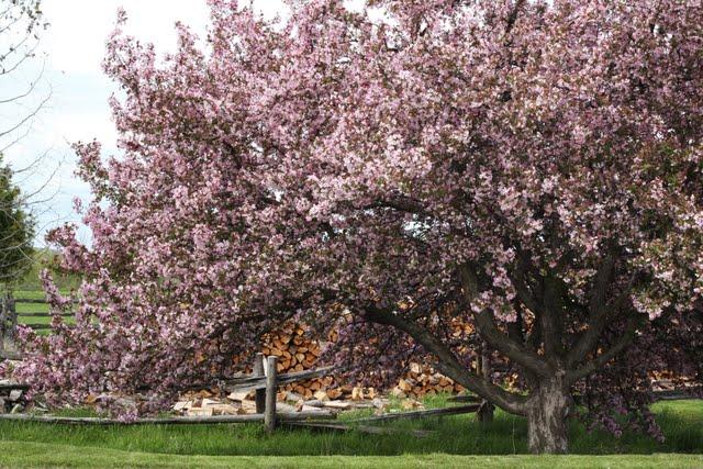 Photo: Beautiful tree in spring