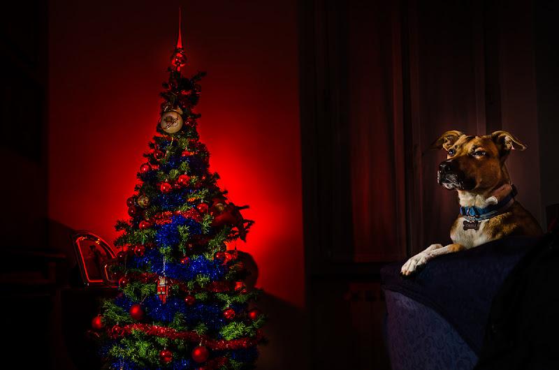 Aspettando Babbo Natale di Bertuele