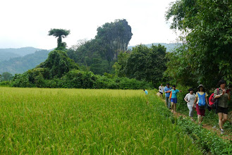 Photo: Walking past ripening rice fields