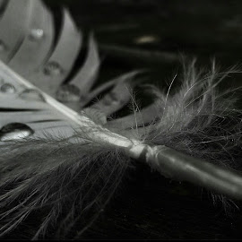 Falling feather by Rajesh Mondal - Nature Up Close Other Natural Objects ( mobilography, feathers )