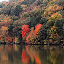 Autumn Reflections by Rick Covert - Landscapes Forests ( water, reflection, autumn, foliage, arkansas,  )