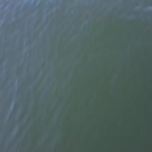 レヴォーグ VM4のカスタム事例画像 猫電さんの2021年02月22日20:07の投稿