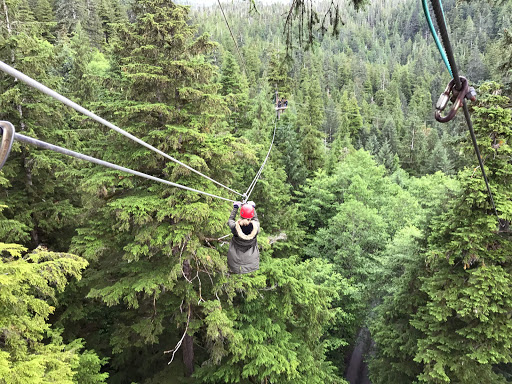 ketchikan-zipline.jpg - The scene during our zipline expedition through a rainforest canopy in Ketchikan.
