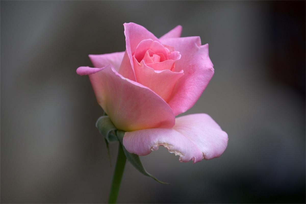 Pretty n' pink.jpg