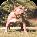Pitbull Dog Wallpaper icon