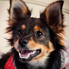 Puppy. by Eliani Miranda - Animals - Dogs Portraits ( red, puppy, dog, cute, small )