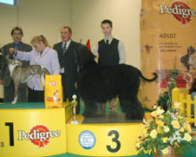 Photo: INT Show Nitra, SK 3rd place with ICh. Al Pacino Gandamak judge: Mr. R. Kanas/SK Saturday, March 22, 2003
