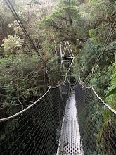 Photo: The brand new canopy walkway in Wayqecha