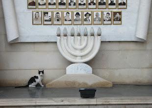 Photo: Synagoogan kissa :-)