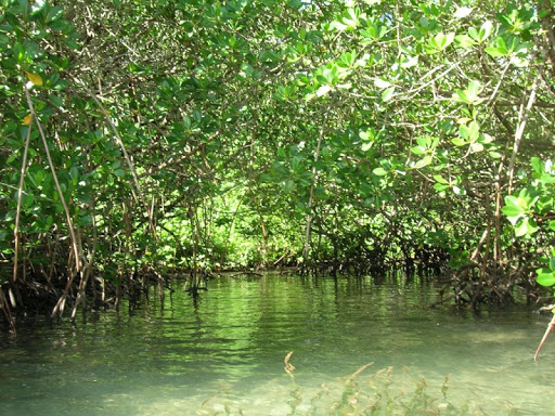 Mangroves Wallpapers HD FREE