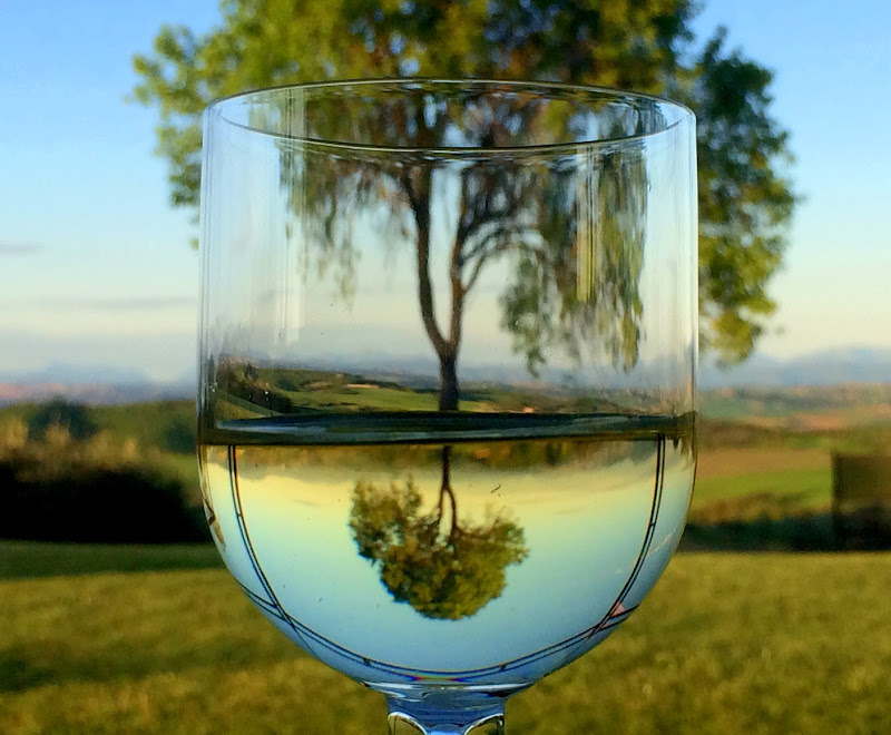 A glass of tree di enricavecchi