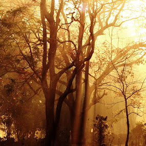 tree by Dhruv Ashra - Nature Up Close Trees & Bushes ( bandipur, trees, forest, pwcfallleaves-dq, light, golden,  )