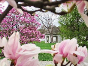 Photo: View of a gazebo by the lake framed by pink magnolias at Cox Arboretum in Dayton, Ohio.