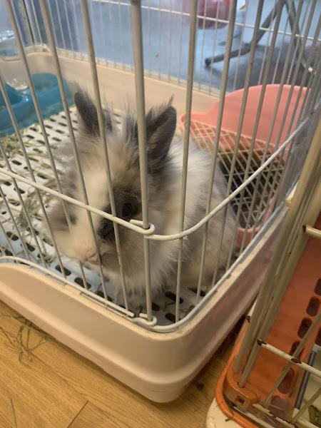 覺得價格很便宜 還有很好吃的飯糰跟可愛的兔子可以看😍