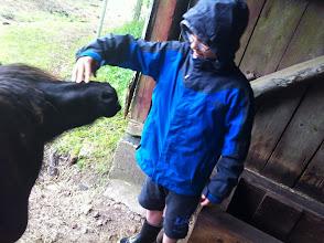 Photo: Vi efterlader lama-mor lidt alene med sin nyfødte. Der er mange andre dyr på gården.  Hvis man vælger at bo på gården, i en eller flere dage, kan både børn og voksne indgå i det daglige arbejde med dyrene