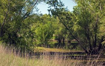 Photo: West Area Pond -Bryce Lane Area