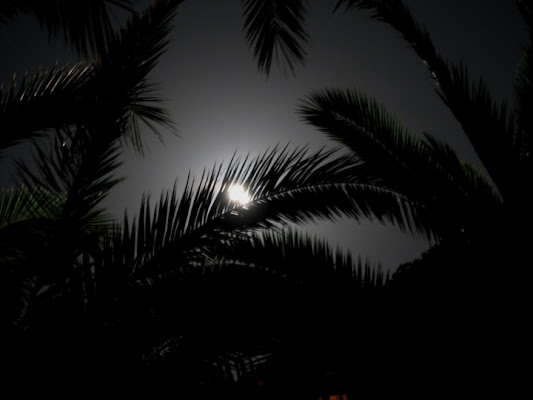 Notturno greco di knicks
