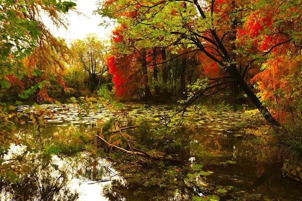 Il laghetto in autunno di Cary