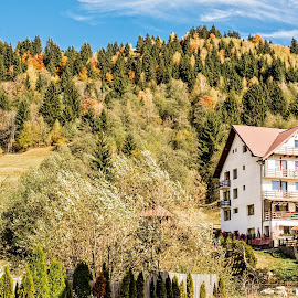 Autumn in the Hills by Richard Michael Lingo - Landscapes Mountains & Hills ( landscapes, hills, autumn, romania, trees )