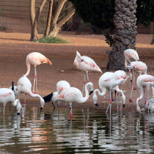 Al Ain Zoo Jigsaw Puzzles