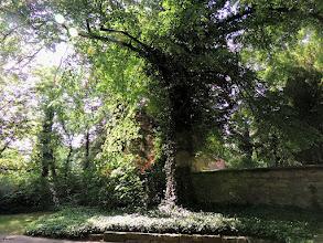 Photo: shade #TreeTuesday by // +Shannon S. Myersand // +Christina Lawrie