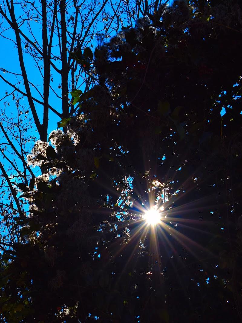 la luce nell'ombra di samcatta