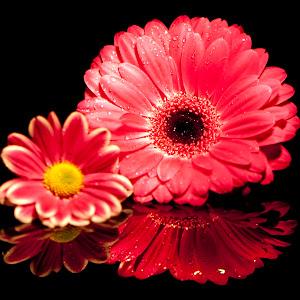 pinkpinkflowers.jpg
