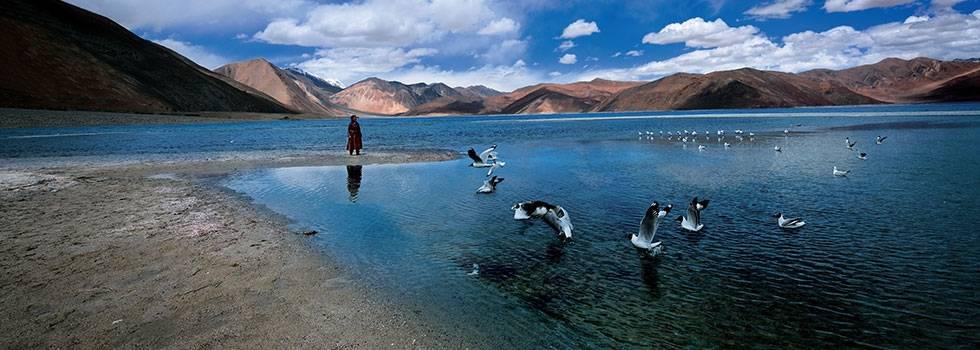 leh ladakh birds_image