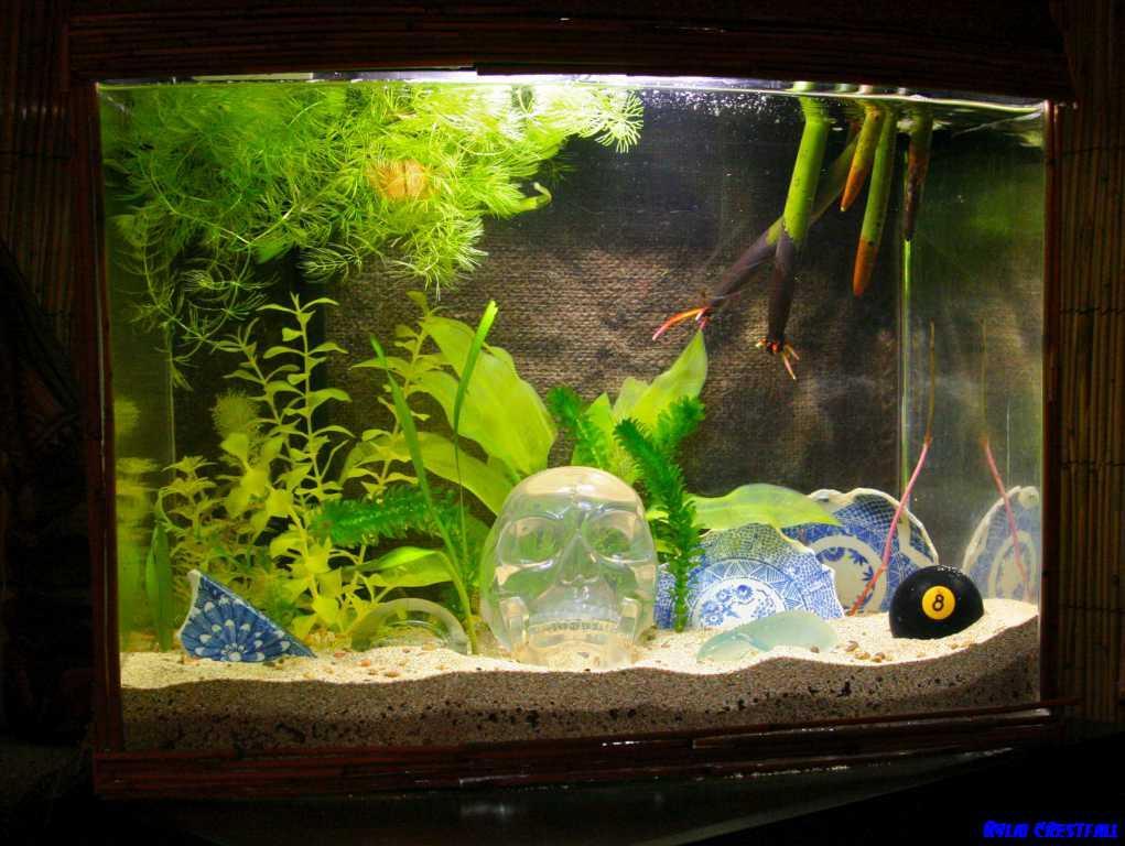 Small Fish Tank Decoration Ideas Garden Image Decoration Design