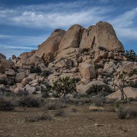 Jumbo Rocks by Ruth Sano - Landscapes Mountains & Hills ( hill, mountain, rocks, desert, joshua tree national park )