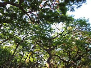 Photo: tree canopy on campus at Tunghai University
