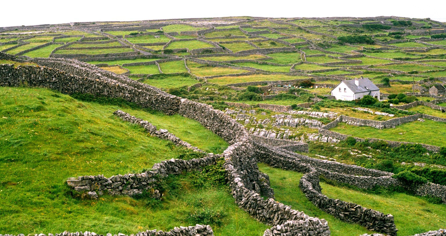 Irish Dry Stone Walls.jpg