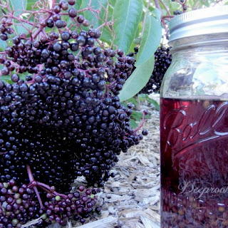 Elderberry Cold & Flu Syrup and Tincture.