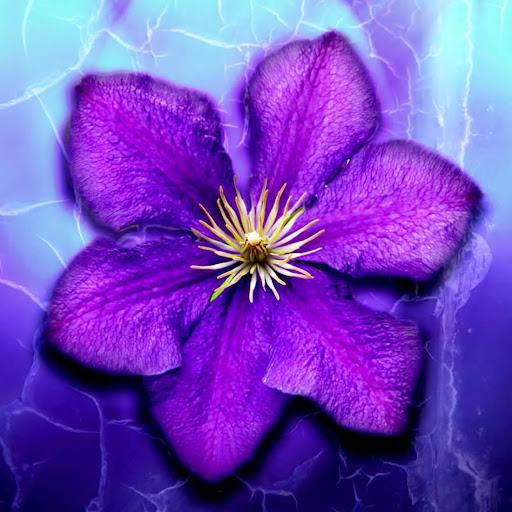 紫色の花ライブ壁紙