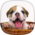 Puppy Live Wallpaper 🐕 Pictures of Cute Puppies icon