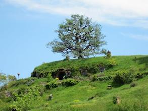 Photo: El árbol de Bolsón Cerrado...