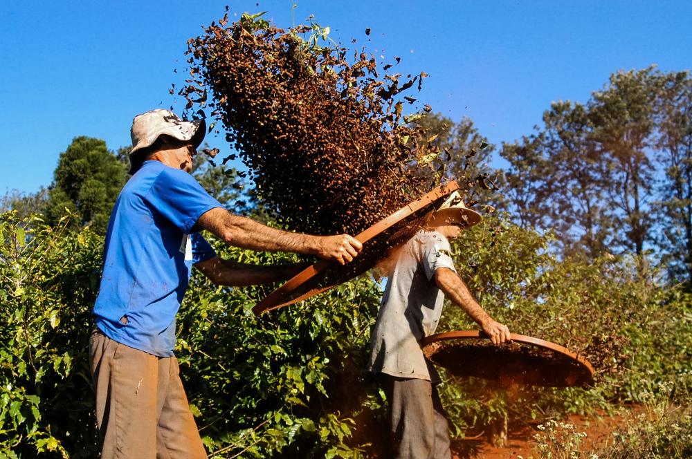 Durante décadas, o café foi o grande impulsionador da economia brasileira. (Fonte: Shutterstock/Jair Ferreira Belafacce/Reprodução)
