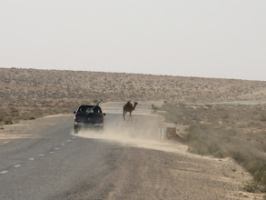 Photo: Achtung, Camel Crossing